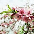 Kiss Of Spring by Kira Yan