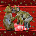 Kissing Chimpanzees Hearts by Rockin Docks Deluxephotos