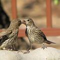 Kissing Cousins by Marilyn Barton