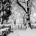 Kissing Gate In The Snow by Steve Purnell