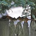 Kissing On A Fence by Jo-Ann Matthews