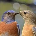 Kissy Face Closeup I by Linda Brody