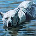 Kita Swimming The Platte by Dustin Miller