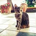 Kitcat by Mihovil Crnic