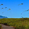 Kites by Robert Bales