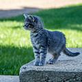 Kitten 1 by Chad Rowe