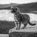 Kitten 2 by Chad Rowe