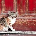 Kitten By Red Door by Tarisa Smith