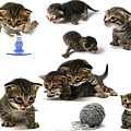 Kitten Collage by Yedidya yos mizrachi