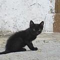 Kitten In Iznajar by Chani Demuijlder