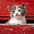 Kitten In Red Drawer by Garry Gay