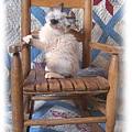 Kitten In The Rocker by Sue Martin