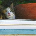 Kitten In The Window 2 by Lenore Senior