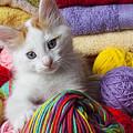 Kitten In Yarn by Garry Gay