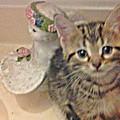 Kitten Love by Shirley Riggs-spencer
