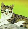 Kitten On Rock by Johannes Margreiter