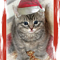 Kitten Playing Santa  by Geraldine Scull