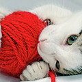 Kitten Playing With Red Ball Of Yarn by Sami Sarkis