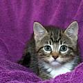 Kitten, Purr-fect In Purple by Sheila Fitzgerald