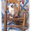 Kitten, Quilt And Rocker by Sue Martin