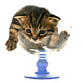Kitten Sits In A Glass  by Yedidya yos mizrachi
