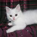 Kitten Snow White On Green And Pink Plaid by Pamela Benham