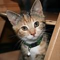 Kitten by Steve K