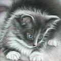 Kitten by Valentina Vassilieva