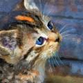 Kitten Watercolor by Jill Lang