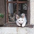 Kittens In Zuheros by Chani Demuijlder
