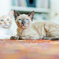 Kitties Sisters by Cindy Loughridge