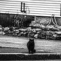 Kitty Across The Street Black And White by Marina McLain
