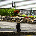 Kitty Across The Street  by Marina McLain