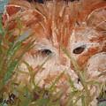 Kitty Adventures by Barbara Andolsek