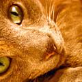 Kitty by Amanda Barcon