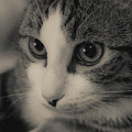 Kitty by Angelique Tisserand