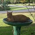 Kitty Bird Bath by Linda Williams