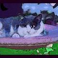 Kitty Blue by David Carter