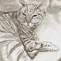 Kitty Cat by Americo Salazar