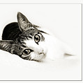 Kitty Cat Greeting Card Congratulations by Andee Design