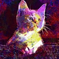 Kitty Cat Kitten Pet Animal Cute  by PixBreak Art