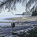Kitty Colemans Beach - Bc by Joseph Coulombe