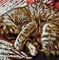 Kitty Dreams by David G Paul