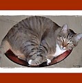 Kitty In A Bowl by Terry Mulligan