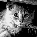 Kitty In Black White by Shannon Story