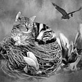 Kitty In The Nest Painting - Black And White by Ericamaxine Price