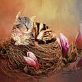Kitty In The Nest Painting by Ericamaxine Price