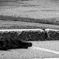 Kitty In The Street Black And White by Marina McLain