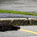 Kitty In The Street by Marina McLain