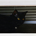 Kitty In The Window 2 by Don Baker